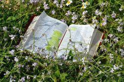 bibleinflowers