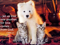 let-us-love-one-another-for-love-comes-from-god-bible-quote