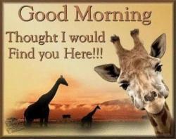 sandy51-good-morning-giraffe-jpg-2_500